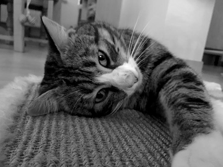 Foto Katze Ari